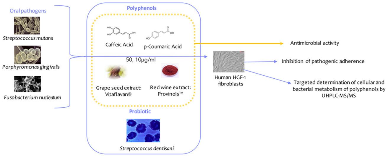 Polifenóis